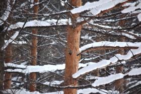 snow2_140115