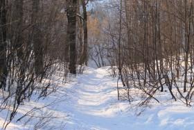 tropinka-sneg-les010315