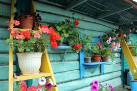 derevnya-flowers_210619