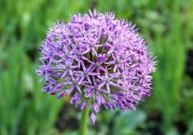 flower110615