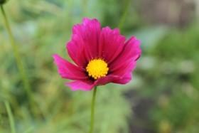 flowers11_170819