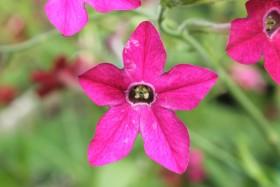 flower3_041019