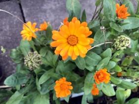 flower3_051019
