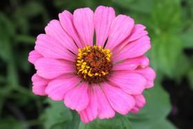 flower3_071019