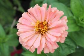 flower_170819