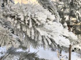 zima-sneg-moroz_141219