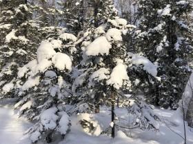 zima-sneg-les2_180220