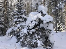 zima-sneg_220220