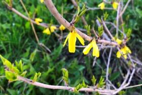 flower-vesna3_030520