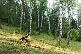 forest-les-priroda-bashkiria-1-030820