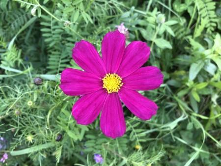 flower2_010920