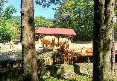 nosorog-zoopark-101017