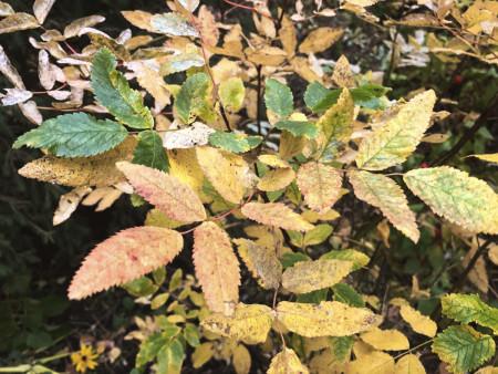 osen-autumn-fall_211020
