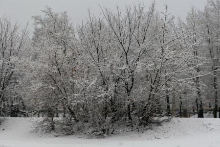 sneg-park-derevo_100720