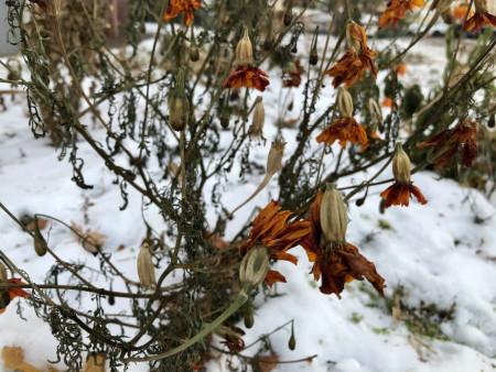 zima-sneg-flower_221120