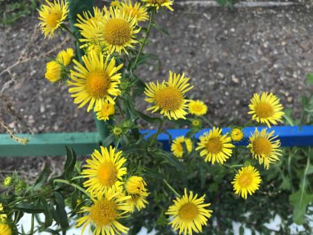 flower2_270621